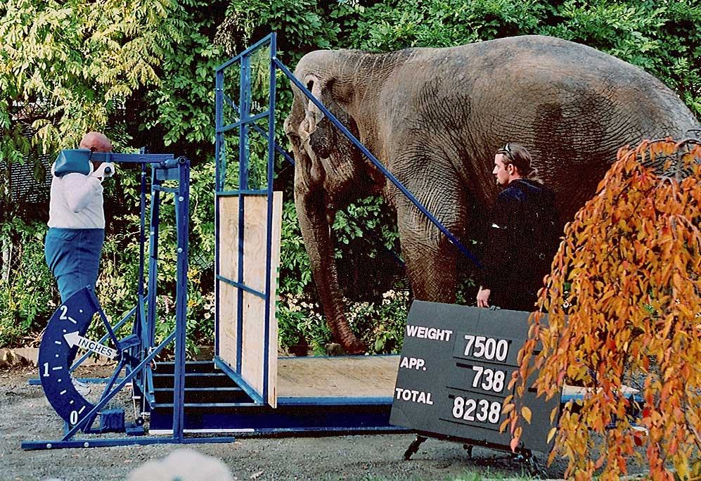 Lifting-an-elephant-sri-chinmoy
